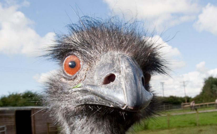 The Great Emu War
